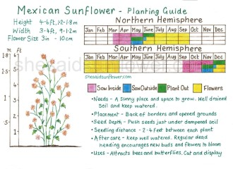 mexican sunflower copyright version (Featured)