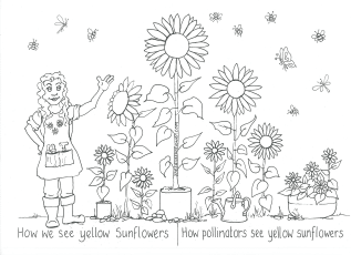 How We See Yellow Sunflowers (free download)