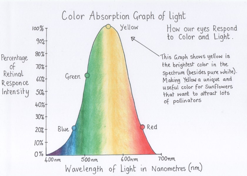 color absorption graph of light